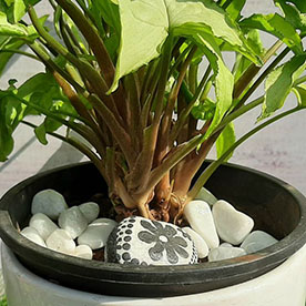 Black Flower-pebble-art-handcrafted-garden-and-room-dcor-for-home-by-nursery-serve