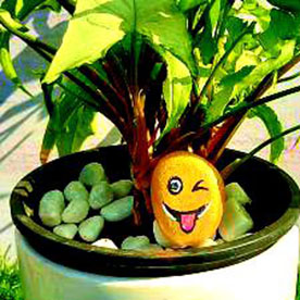 Mango Smiley, Pebble Art Handcrafted Garden and Room Décor for Home by NationBloom