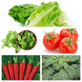 Set of 5 Vegetables You Can Harvest Indoors Year Round