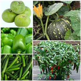 Set of 5 Best Vegetable Seeds to Plant in Rainy Season