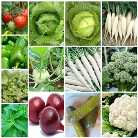 Set of 13 Best Seeds for Easy Home Gardening