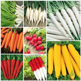 Set of 8 Best Radish and Carrot Seeds
