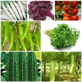 Set of 7 Easy to Grow Vegetable Seeds