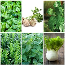 Set of 6 Herbs You Can Grow In Water