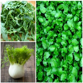 Set of 3 Easy and Nutritious Microgreen Herb Seeds