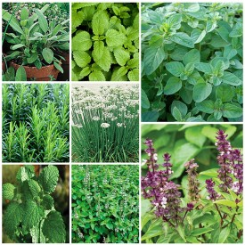 Set of 8 Easy to Grow Herb Seeds
