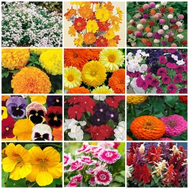 Set of 12 Best Flower Seeds to Plant in Rainy Season