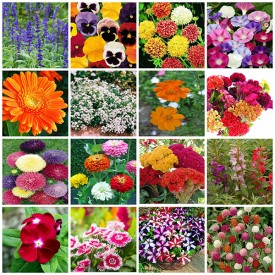 Set of 18 Easy to Grow Flower Seeds