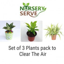 Set of 3 Plants pack to Clear The Air