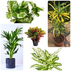 Set of 5 Foliage Mansoon Plants for Home interior