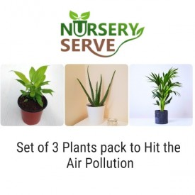 Set of 3 Plants pack to Hit the Air Pollution