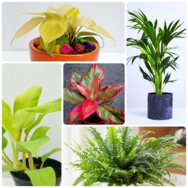 Set of 5 Shades of Liberal Home Plants
