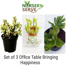 Set of 3 Office Table Bringing Happiness