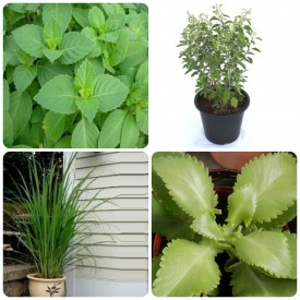 Set of 4 Healthy Home Plants