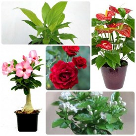 Set of 5 Love of Expression Plants