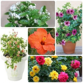 Set of 5 Yearly Flowering Plants