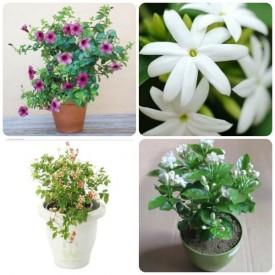 Set of 4 Throughout the Year Flowering Plants