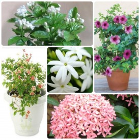 Set of 5 Special for Mansoon Flowering Plants