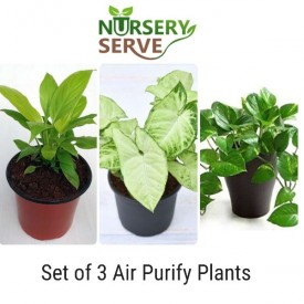 Set of Air Purify Plants