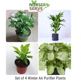 Set of 4 Purify Winter Air Plants