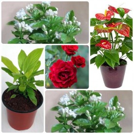 Set of 5 Love Expression Flowering Plants