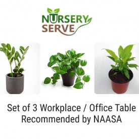 Set of 3 Workplace or Office Table Recommended by NAASA