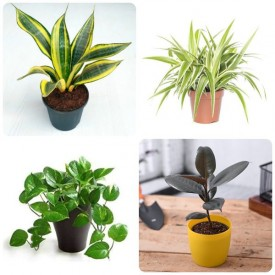 Set of 4 Special for Environment Day Plants