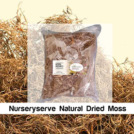 Nurseryserve Natural Dried Moss 500GM for Water Retention in pots